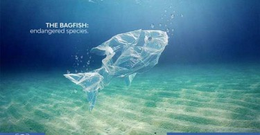bagfish-thumb