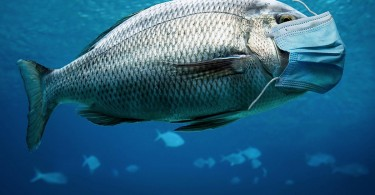 fne-masks-international-fish_resized