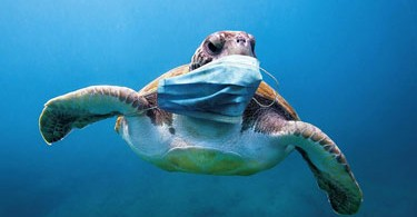 fne-masks-international-turtle