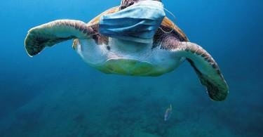 fne-masks-international-turtle_resized